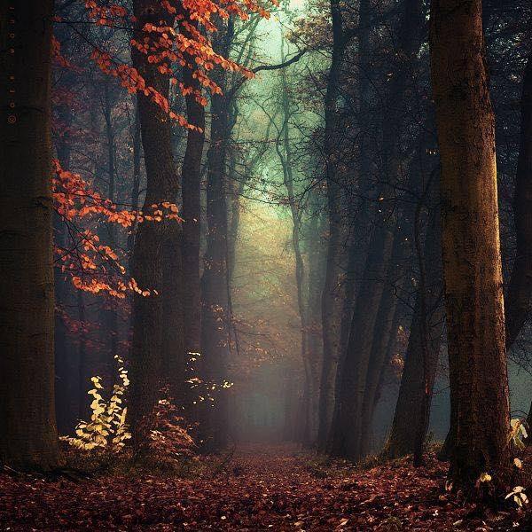 Bosque © J-W • V A N • E D E R E N